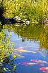 Le parc des jardins aquatiques guide sortir - Les jardins aquatiques saint didier sur chalaronne ...